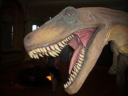 Lebendrekonstruktion eines Frenguellisaurus ischigualastensis, Kopf mit aufgerissenem Maul.
